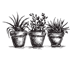 Flower pots vector