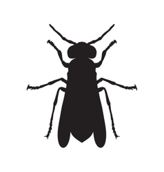 Wasp sketch of wasp wasp isolated on white vector