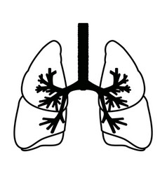 Human lungs anatomy medical science internal organ vector