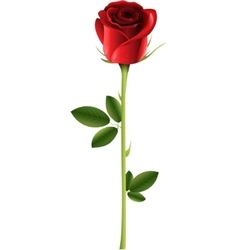 Alone rose isolated on white background vector