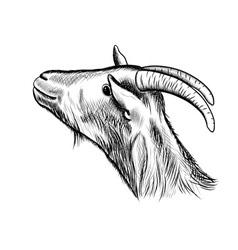 goat sketch vector image vector image