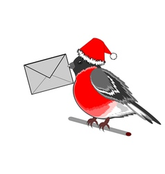 A christmas bullfinch with a letter vector