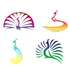 Peacock birds vector