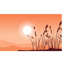 silhouette of coarse grass with mountain vector image