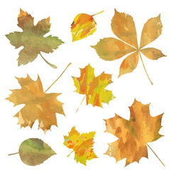 Decorative leaves vector