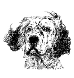 English setter 03 vector image vector image