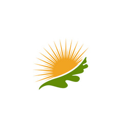 Maple oak leaf logo template vector