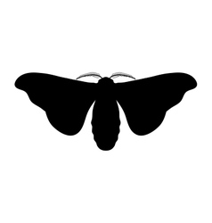 Butterfly bombyx mori sketch of butterfly vector