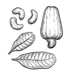 Cashew ink set vector