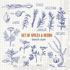 Set of herbs and spices in sketch style on paper vector