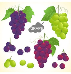 Set of grapes in various styles vector