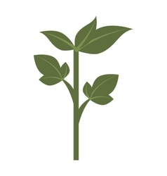 Green plant leaves icon vector