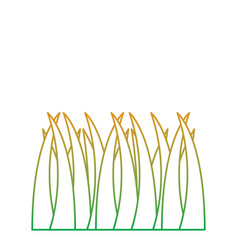 grass natural botanical foliage icon vector image