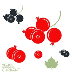 Red currant blackcurrant vector