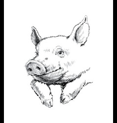 Hand drawn sketch pig vector