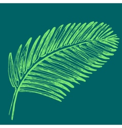 Palm leaves  tropical jungle plant vector