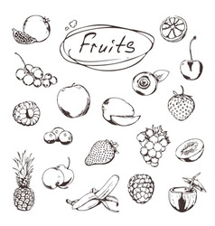 Fruits and berries sketches of icons set vector
