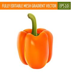 Orange pepper on white background vector