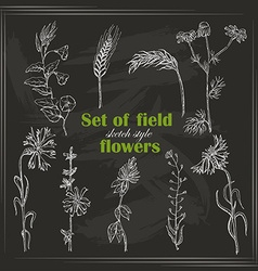 Set of isolated field plants in sketch style on vector