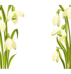 Snowdrop flowers vector