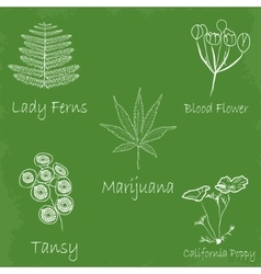 set of hand draw medecinal herbs vector image