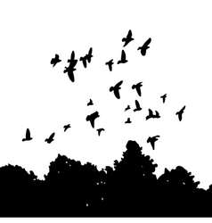 black silhouettes of a flock doves Columba livia vector image