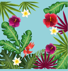 Cute framework with exotic flowers plants vector