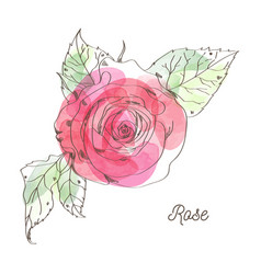 Rose for valentine graphic design vector
