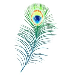 Feather of peacock vector