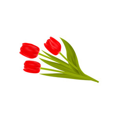 bouquet of spring tulips flowers isolated on white vector image