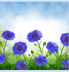 Cornflowers with bokeh vector