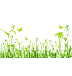 flowers and green grass vector image