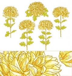 Set of 5 chrysanthemum flower vector