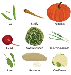 Set of different vegetables vector