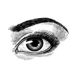 hand-drawn beautiful female eye sketch makeup vector image