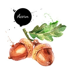 Hand drawn watercolor painting of acorn isolated vector image