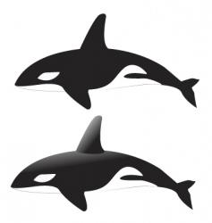 Killer whales vector
