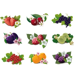 Set of ripe fruits vector