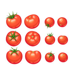 Tomatoes icon isolated vector