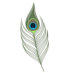 Feather Peacock vector image vector image