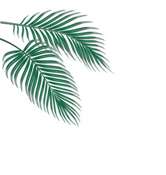 two tropical palm leaves isolated on white vector image