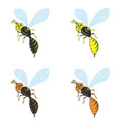 A wasp vector