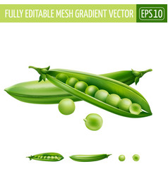 Green peas on white background vector