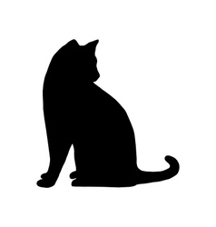 Cat on white vector image