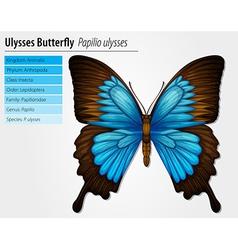 Blue Mountain Swallowtail vector image vector image