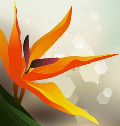 Floral background Strelitzia - desktop wallpaper vector image