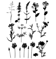 Silhouettes of flowers vector