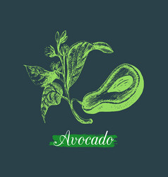 Avocado fruitseed and branch vector