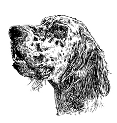 English setter 12 vector image vector image