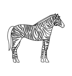 Zebra wild animal vector